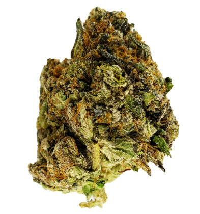 (5 STAR) Blue Tuna – Indica