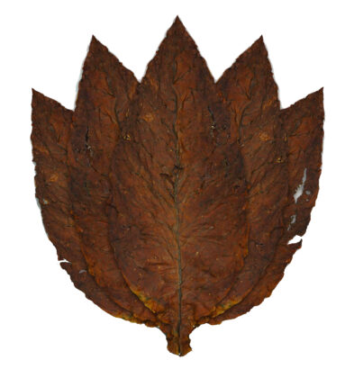 Hot Red Herring Grabba Tobacco Leaf – 14G